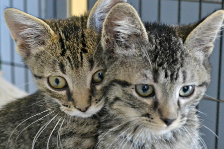 Animal Control twin cats