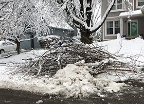 Free large limb bulk pick-up due to snow